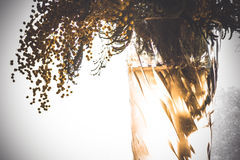 Un ramo de mimosa fotografía de archivo libre de regalías