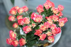 Un ramo de rosa blando floreciente - rosas blancas en un fondo ligero foto de archivo libre de regalías