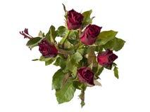 Un ramo de rosas fotografía de archivo