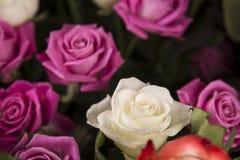 Un ramo de rosas blancas y rosadas para el regalo de una tarjeta del día de San Valentín fotografía de archivo