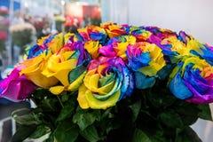 Un ramo de rosas de colores multi exóticos El camaleón florece con los pétalos coloreados en los bordes fotos de archivo