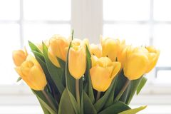 Un ramo de tulipanes amarillos Imágenes de archivo libres de regalías