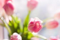 Un ramo de tulipanes en un florero Foco selectivo suave imágenes de archivo libres de regalías