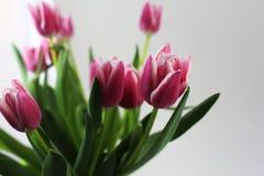Un ramo de tulipanes rosados Imágenes de archivo libres de regalías