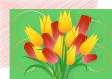 Un ramo de tulipanes, una postal Foto de archivo