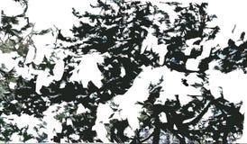Un ramo del pino nella neve Fotografia Stock Libera da Diritti
