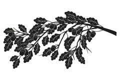 Un ramo della quercia illustrazione di stock