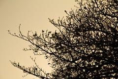 Un ramo della siluetta Fotografie Stock Libere da Diritti
