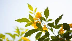 Un ramo di albero in pieno delle foglie scure e verde chiaro insieme a Fotografia Stock