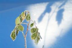 Il ghiaccio è aumentato Fotografia Stock Libera da Diritti