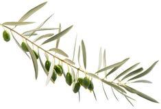Un ramo e gocce di olio d'oliva che cadono da determinate olive verdi fotografie stock