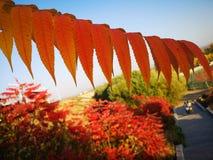 Un ramo ed alberi nella stagione di caduta fotografia stock