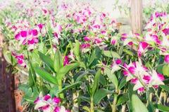 Un ramo grande de orquídeas blancas y rosadas Cierre para arriba Fotografía de archivo libre de regalías