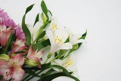 Un ramo hermoso con rosa del astromeria de las flores florece con el espacio de la copia en el fondo blanco Foto de archivo libre de regalías