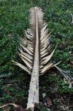 Un ramo secco che si trova nella pianta verde Immagini Stock Libere da Diritti