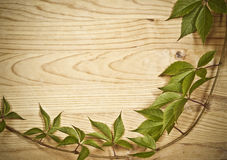 Un ramoscello selvaggio del vino su priorità bassa di legno Immagine Stock
