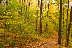 Un rastro colorido en el bosque Foto de archivo libre de regalías