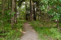 Un rastro de la suciedad en el bosque Fotos de archivo