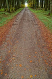 Un rastro del bosque en otoño fotos de archivo libres de regalías