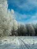 Un rastro del esquí en bosque nevoso del invierno Imagen de archivo