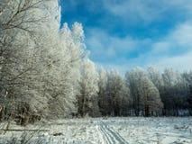 Un rastro del esquí en bosque nevoso del invierno Fotos de archivo