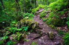 Un rastro en el bosque Imagenes de archivo