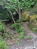 Un rastro secreto en el bosque foto de archivo