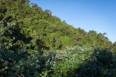 Un rastro a través de la selva tropical tropical al sitio para acampar Raung es el más desafiador de los rastros de la montaña de foto de archivo libre de regalías