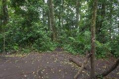 Un rastro a través de la selva tropical tropical al sitio para acampar Raung es el más desafiador de los rastros de la montaña de imagen de archivo