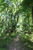 Un rastro a través del bosque tropical imagen de archivo