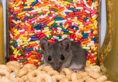 Un ratón con el caramelo y el cereal fotografía de archivo