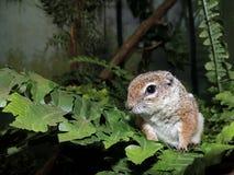 Un ratón del bosque foto de archivo libre de regalías
