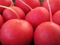 Un ravanello è colore rosso del giardino Fotografie Stock