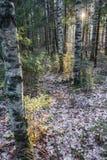 Un rayo de la luz del sol en el bosque del otoño Imágenes de archivo libres de regalías