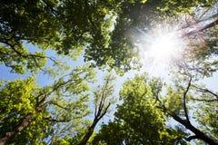 Un rayo de la luz del sol en los árboles Fotos de archivo libres de regalías