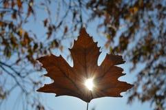 Un rayo de la luz del sol, ll del ` lo encontramos siempre en vida Foto de archivo