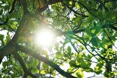 Un rayon de soleil perçant par des feuilles photographie stock libre de droits