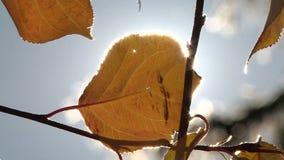 Un rayon des coupures du soleil par les feuilles banque de vidéos