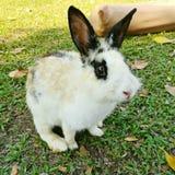 Un Rebbit in un giardino Fotografia Stock Libera da Diritti