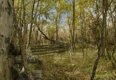 Un recintare la foresta Immagini Stock