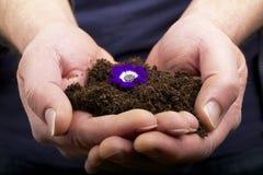 Regalo violeta Imagen de archivo libre de regalías