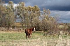 Un regard de cheval libre photo libre de droits