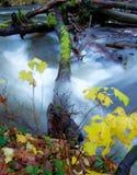 Un registro atraviesa los rápidos mientras que la caída coloreó amarillo del brillo de las hojas en el primero plano Imagenes de archivo
