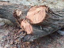 Un registro de madera Imagen de archivo