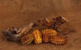 Un registro seco y una fruta secada del desierto en un fondo marrón Imagen de archivo libre de regalías
