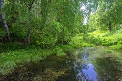 Un remanso reservado con los árboles de abedul grandes en la orilla Imagenes de archivo