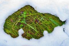 Un remiendo deshelado en la nieve con la hierba verde, primavera fotos de archivo libres de regalías