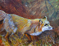 Un renard sauvage flânant sur l'herbe Image stock