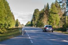 Un reno blanco joven solo camina en un camino en Finlandia imágenes de archivo libres de regalías
