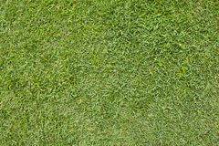 Un reticolo dell'erba. Fotografie Stock